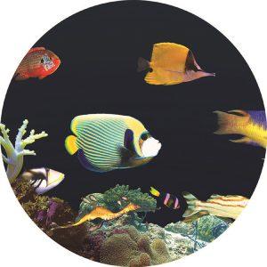 Effekthjul Tropiska Fiskar, 15cm (magnetfäste)