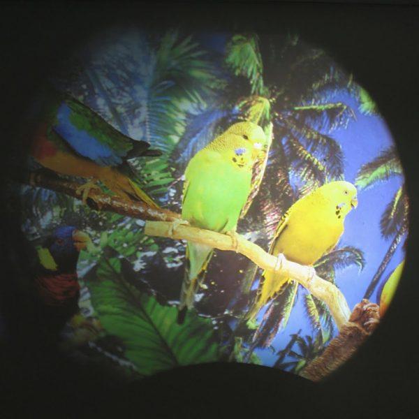 Effekthjul Tropiska Fåglar, 15cm (magnetfäste)