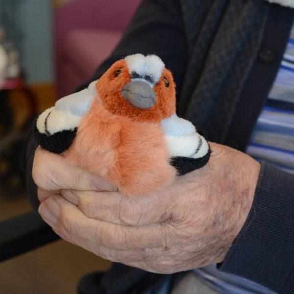 Fågel, Domherre